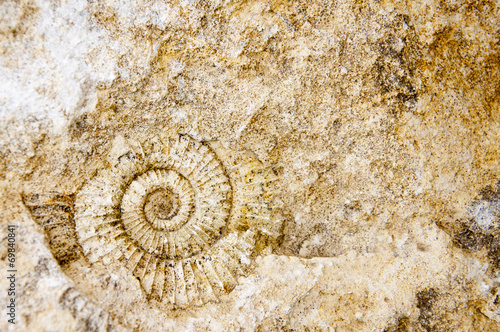 fossil ammonite on stone - background Wallpaper Mural