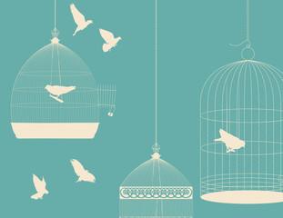 Birds and birdcages postcard 5