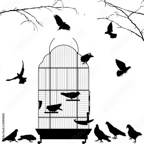 Poster de jardin Oiseaux en cage Open bird cage and birds