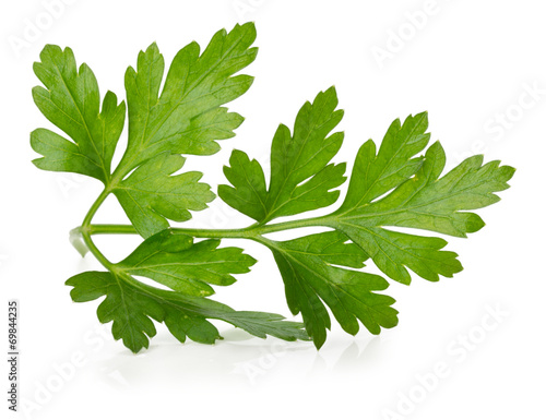 Fotografía  parsley leaves isolated on the white background