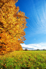 Fototapeta Łąka Autumnal landscape