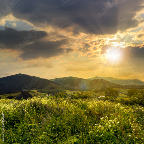 Fotobehang Zwavel geel high wild plants in mountains at sunset