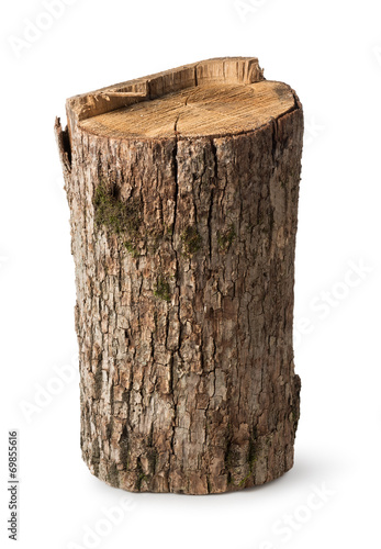 Fotografia  Big stump