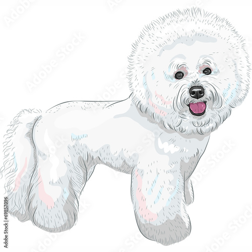 Fotografia, Obraz  vector white cute dog Bichon Frise breed