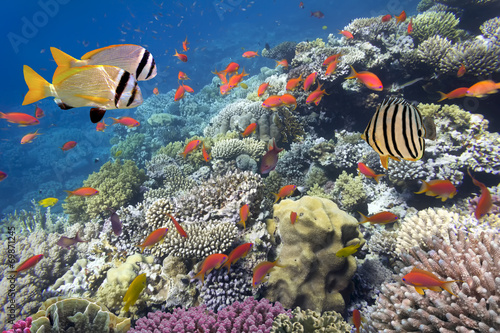 Poster Sous-marin Coral reef with soft and hard corals