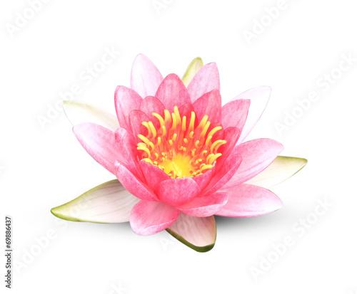 Deurstickers Lotusbloem Lotus
