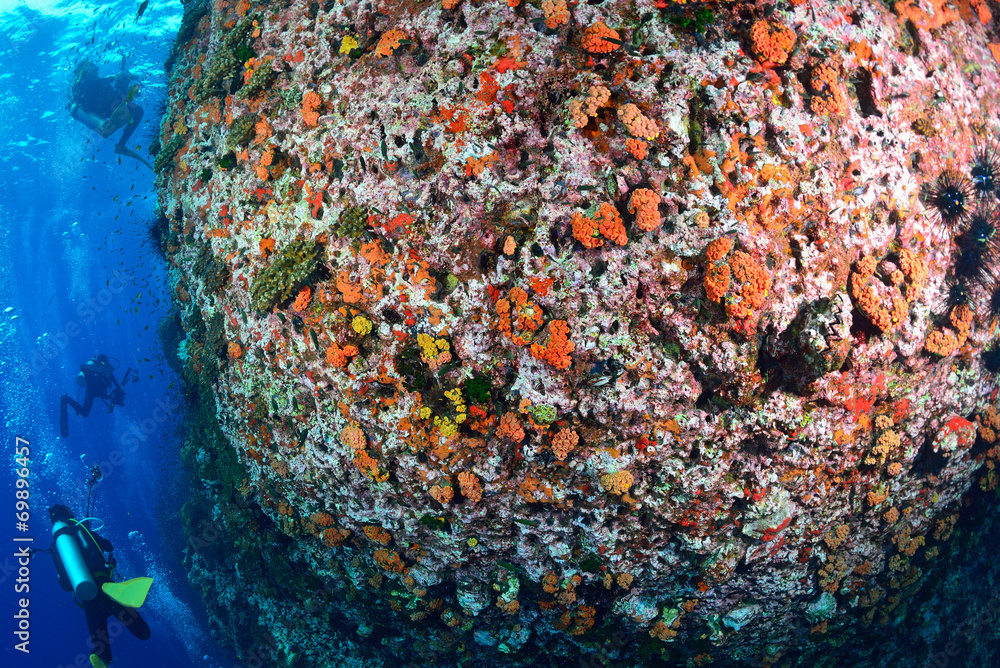 beautiful coral Reef in Chumporn national park, Thailand