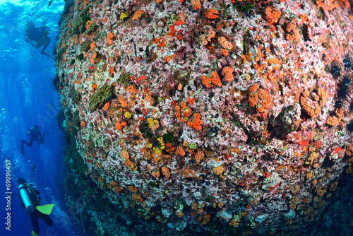 Fototapety, obrazy: beautiful coral Reef in Chumporn national park, Thailand