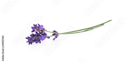 Foto op Canvas Lavendel Lavender flowers isolated on white
