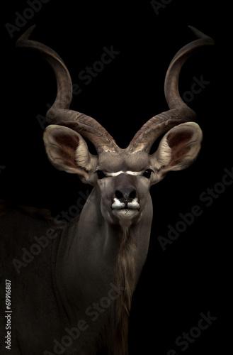 Foto op Aluminium Antilope greater gudu