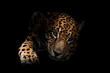 canvas print picture jaguar ( Panthera onca )in the dark