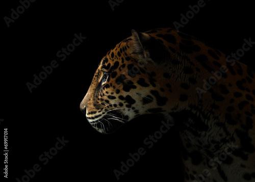 Photo Stands Panther jaguar ( Panthera onca ) in the dark