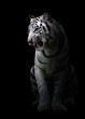 canvas print picture white bengal tigerin the dark