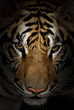 canvas print picture tiger face