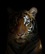 canvas print picture bengal tiger head