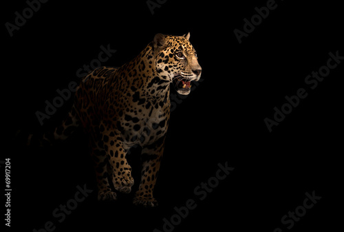 Photo Stands Panther jaguar ( panthera onca ) in the dark