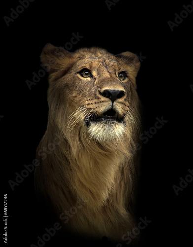 Fotobehang Leeuw lion in the dark night
