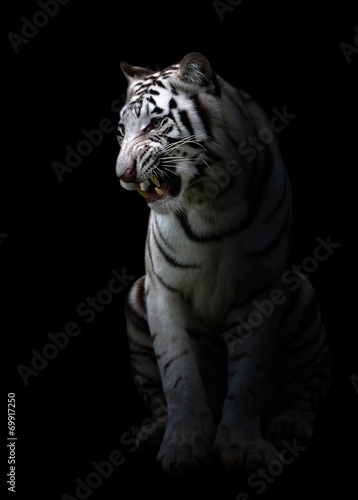 Photo Stands Panther white bengal tigerin the dark