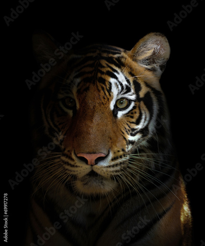 canvas print motiv - anankkml : bengal tiger head
