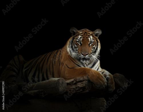 Foto auf AluDibond Tiger bengal tiger