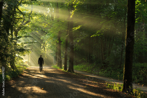 Foto  Man walking in a lane of trees and sun rays.