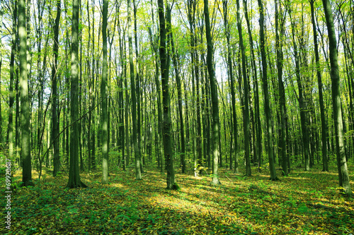 Garden Poster Forest Green spring forest. Landscape.