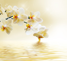 Panel Szklany Beautiful white orchid