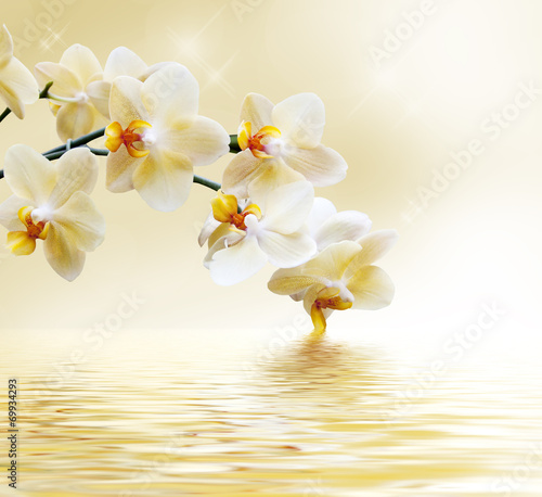 Foto op Canvas Orchidee Beautiful white orchid
