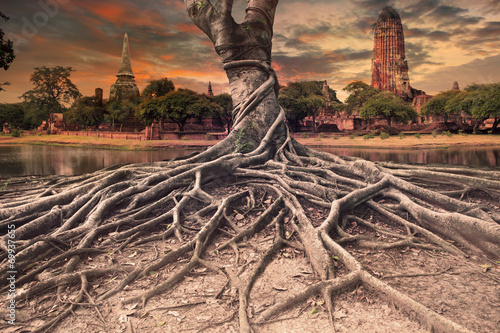Tablou Canvas big root of banyan tree land scape of ancient and old  pagoda in