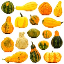 Large Group Of Unique Isolated Autumn Gourds