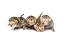 Newborn Kitten On White Backgr...