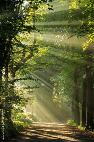 Keuken foto achterwand Bossen Sun rays shining through the trees in a forrest.