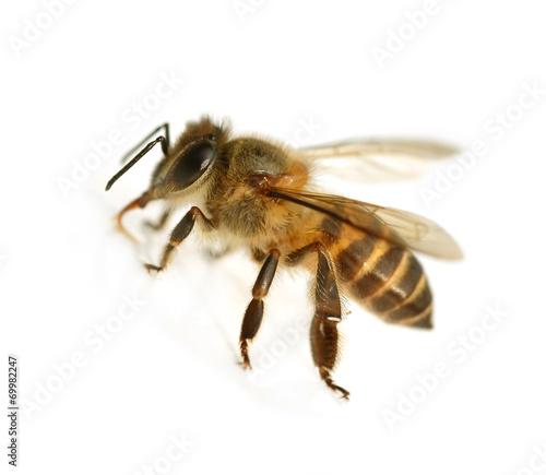 In de dag Bee bee