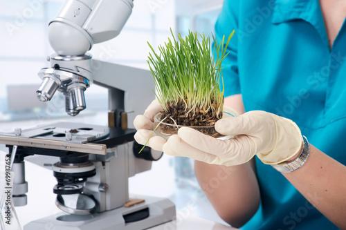 Fotografija  Grass grown in the laboratory