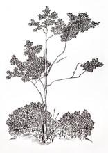 Tree. Graphic Gel Pen Drawing.