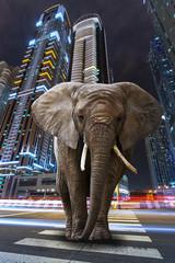 FototapetaA metropolitan jungle with elephant walking on the road