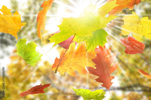 Fotobehang Zwavel geel Herbst 5