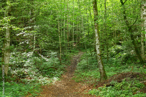 Foto op Canvas Weg in bos bosque