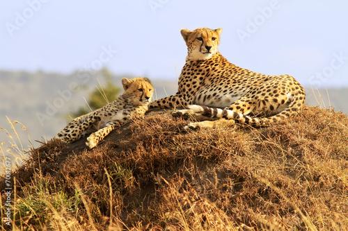 Staande foto Afrika Cheetahs on the Masai Mara in Africa