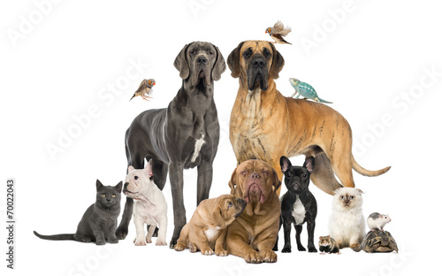 grupa-zwierzat-domowych-pies-kot-ptak-gad-krolik
