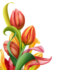 Fototapeta Tulipany abstract composition with tulip flowers illustration