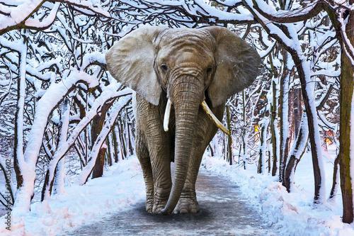 Elephant walking in snowy park scenery