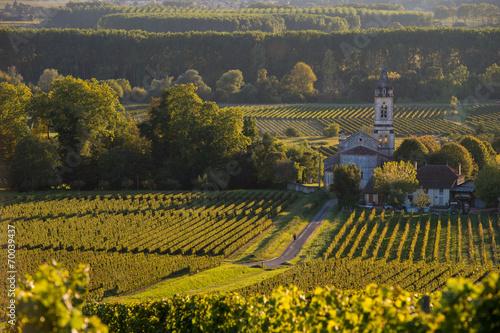 Fototapety, obrazy: Vineyard landscape-Vineyard south west of France-Sauternes-Loupi