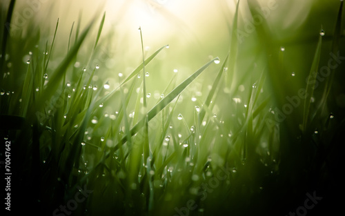 damp morning grass