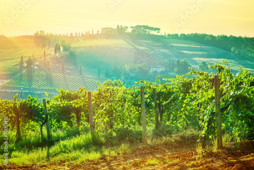 Beautiful grape valley landscape