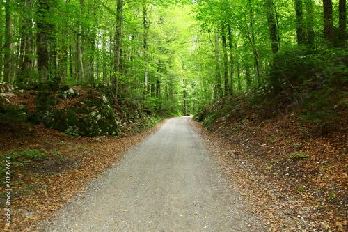 Tuinposter Weg in bos camino s