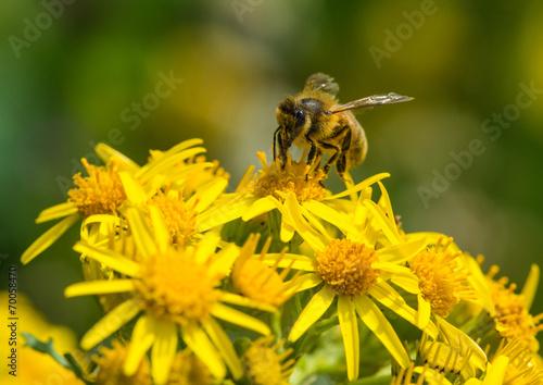 In de dag Bee Getting Down To Business