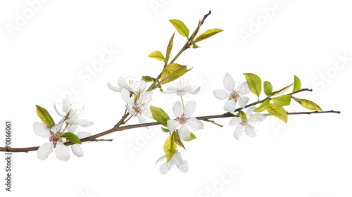 Foto spring tree branch with light flowers