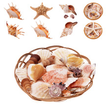 Shells Seashells And Snails Se...