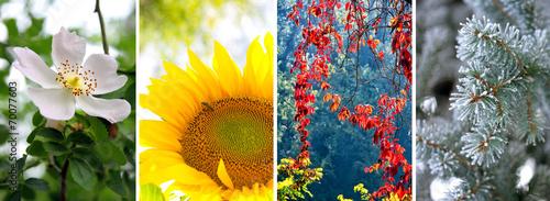 Fotografia Four seasons: Spring, summer, autumn and winter